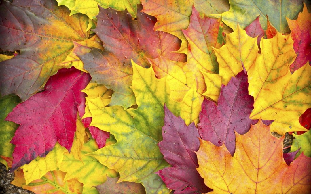 Educational Classes this fall at Alpha Women's Center of Grand Rapids